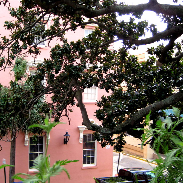 A very Charleston view from my table on the second-story porch