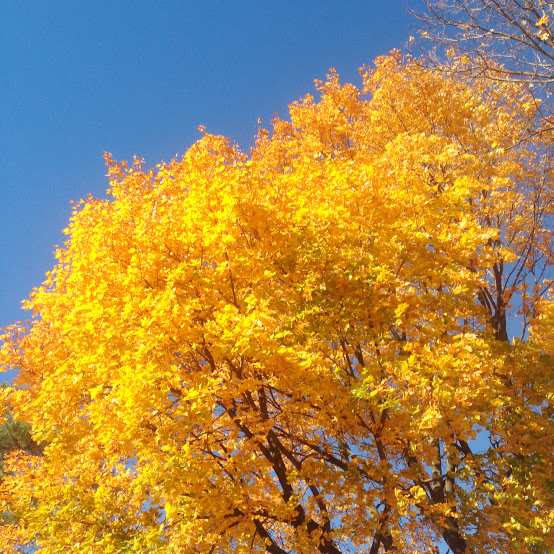 The last of fall foliage in Minneapolis