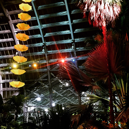 Night lighting in the Palm Room, Beer Under Glass at Garfield Park Conservatory