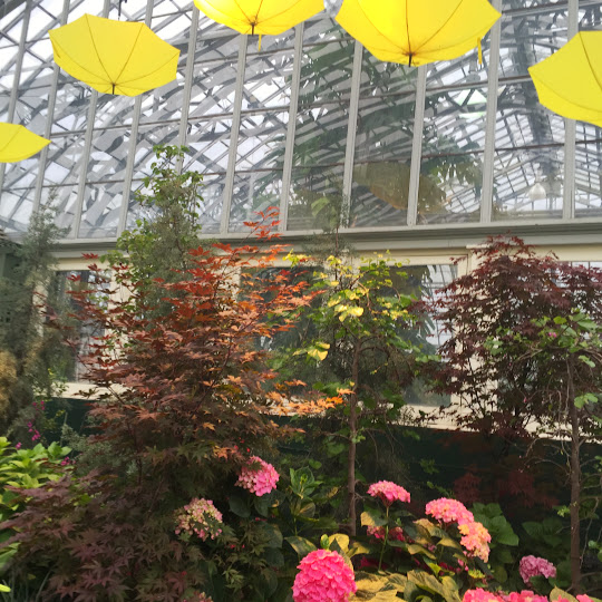 Yellow umbrellas, Beer Under Glass at Garfield Park Conservatory